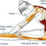 Exercises to Improve Your Posture and Bring Relief to Your Back & Spine, Part 3