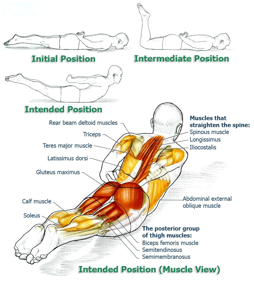 Erector Spinae Stretch And Extension The Health Science