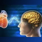 A Study Finds Wisdom to Be a Matter of Both Heart and Mind