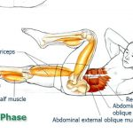 Abdominal Exercises for Spinal and Core Movement and Stabilization: Exercise 7 –Crisscross