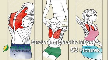Starting Stretching – 53 Full Body Stretches for Beginners