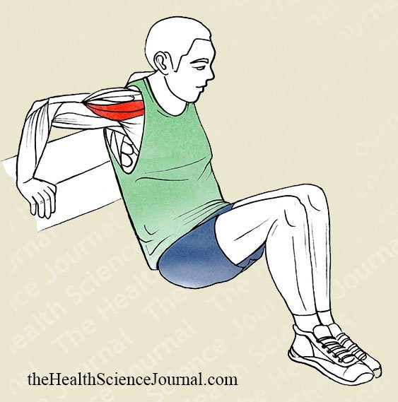 Bench Dip - Stretching