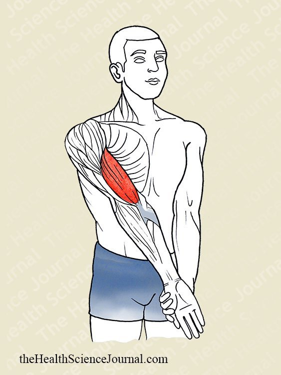 Elbow Extension and Supination-Pronation - Stretching