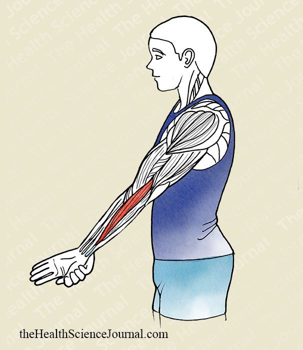Hand Adduction With Extended Elbow