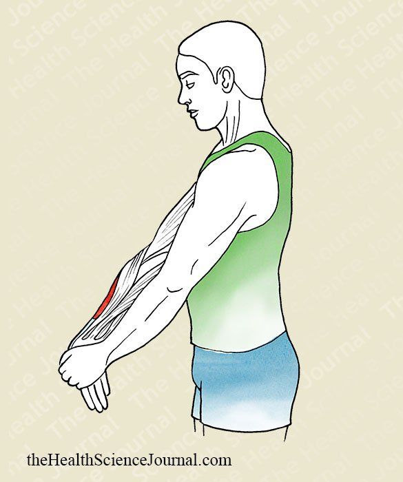 Hand Pronation With Extended Elbow