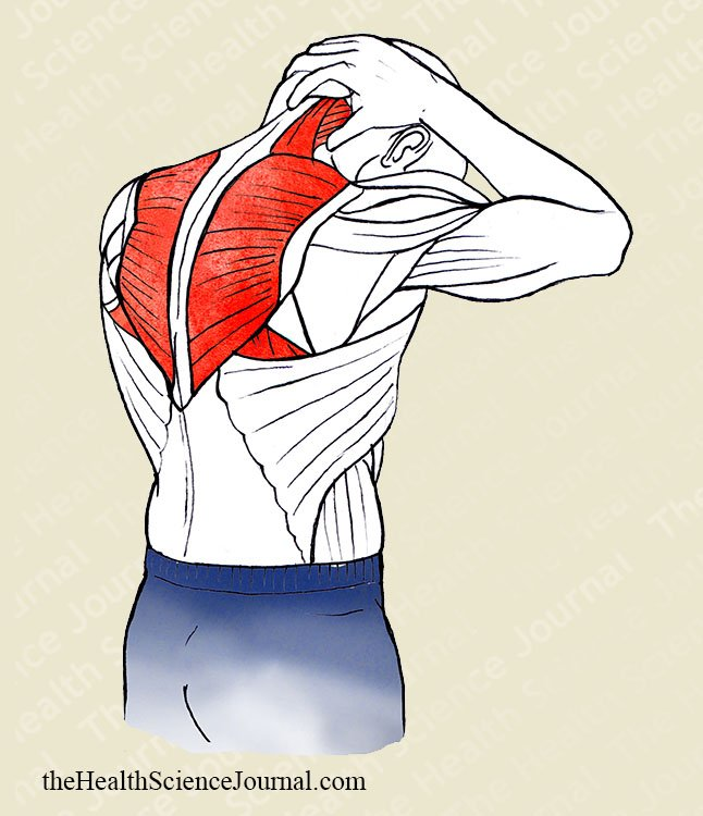 Head and Neck Flexion - Stretching