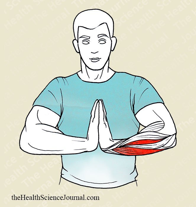Prayer Hand Extension - Stretching