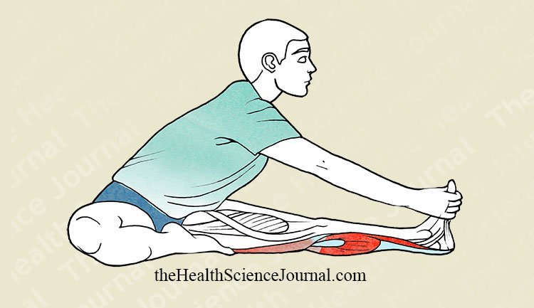 Tibial Flexion Seated With Knee Extended