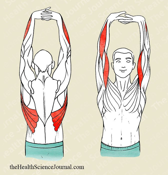 Vertical Arms Extension