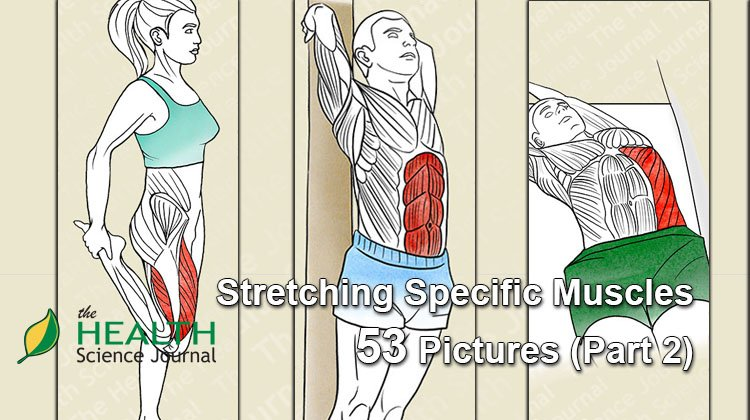 Starting Stretching – 53 Full Body Stretches for Beginners (Part 2)