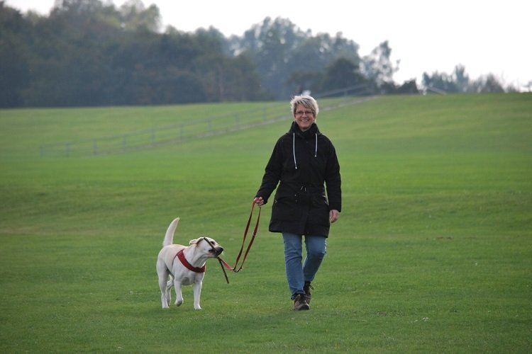 caring-pet-walking